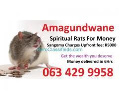 money spells ads Spiritual Rats amagundane +27634299958 Sangoma