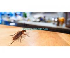 pest control services in bangalore