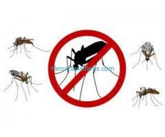 Best Mosquito Pest control Service by sreepesto Lb Nagar