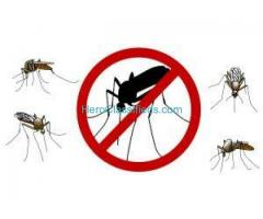 Best Mosquito Pest control Service by sreepesto Miyapur