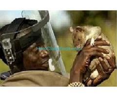 Namibia Botswana Spiritual Rats amagundane money spell +27634299958 Sangoma